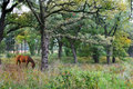 Beautiful Woods and Horse Royalty Free Stock Image