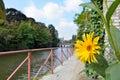 Beautiful Yellow flower. Royalty Free Stock Photo