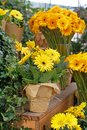 Beautiful Yellow gerberas in flower pot and glass vases Royalty Free Stock Photo