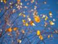 Beautiful Yellow Leaves On A B...