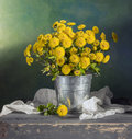 Beautiful yellow mums still life with Royalty Free Stock Images