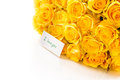 Beautiful yellow rose Royalty Free Stock Image