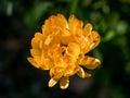 Beautiful yellow wild flower daisy close-up on glade