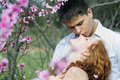 Beautiful young couple in love among the flowering trees of pink Stock Images
