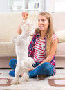 Beautiful young woman training her dog small maltese at home Stock Photos