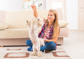 Beautiful young woman training her dog small maltese at home Stock Photography
