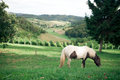 Beautiful zagorje landscape with vineyards and green hills Royalty Free Stock Images