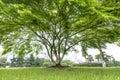 Beautifull green tree in garden Stock Photos
