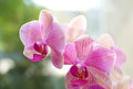 Beautifully blooming purple orchid Stock Image