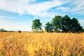 Beautifully landscape Royalty Free Stock Photo