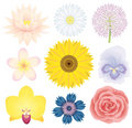 Beautilful flower collection Stock Images