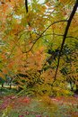 Beauty of Autumn, colourful leaves