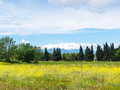 Beauty of catalonia countryside flowery meadow with snowy mountains in the background Stock Photography