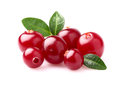 Beauty cranberry in closeup with leaves Royalty Free Stock Image