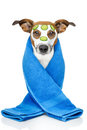Beauty Dog Royalty Free Stock Images