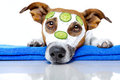 Beauty Dog Stock Image