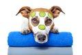 Beauty Dog Stock Photography
