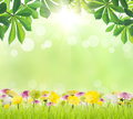 Beauty green leaf and flower on grass spring season Royalty Free Stock Photo