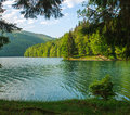 Beauty landscape shore pine trees to mountain lake Royalty Free Stock Photo
