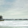 Beauty in nature birds flying over a frozen sea orangeville dufferin county ontario canada Stock Image