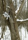 Beauty in nature snow on a tree orangeville dufferin county ontario canada Royalty Free Stock Photos