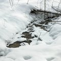 Beauty in nature stream flowing through snow covered landscape orangeville dufferin county ontario canada Royalty Free Stock Photography