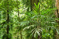 Beauty of the rainforest Stock Image