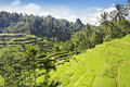 Beauty rice terrace Stock Images