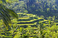 Beauty rice terrace Royalty Free Stock Photography