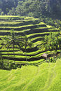 Beauty rice terrace Stock Image