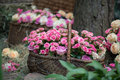 Beauty of roses selective focus on wonderful twisted basket pink standing near the tree another basket different with three Royalty Free Stock Images