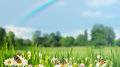 Beauty summer day with daisy flowers Royalty Free Stock Photo