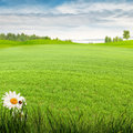 Beauty summer day on the meadow Royalty Free Stock Photo