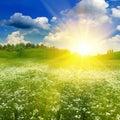 Beauty summer field under bright evening sun Royalty Free Stock Photo