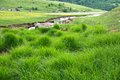 Beauty of summer green grass by the River Uvac at Pester Plateau in Serbia
