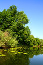 Beauty summer lake landscape Stock Images