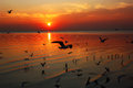 Beauty sunrises with seagulls at bang poo bangkok Stock Photography