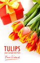 Beauty tulips Royalty Free Stock Image