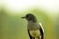Beauty of wild bird Royalty Free Stock Photo