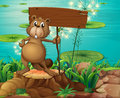 A beaver above the stump holding an empty signboard illustration of Stock Photography