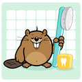 Beaver brushing teeth and flossing holding a toothbrush dental floss Stock Images