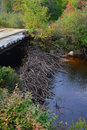 Beaver dam under bridge Royalty Free Stock Photo