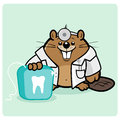Beaver dentist flossing children teeth holding a dental floss Royalty Free Stock Images