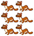 Beaver with different facial expressions Royalty Free Stock Photo