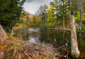 Beaver lodge on autumn pond a the shoreline of an Royalty Free Stock Images