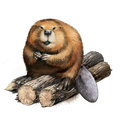 Beaver sitting logs illustration white background Stock Photography