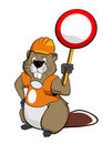 Beaver wearing a helmet and holding a sign Royalty Free Stock Photo