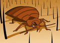 Bed Bug Royalty Free Stock Photo