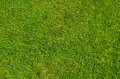 Bed of grass Royalty Free Stock Images