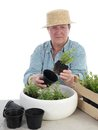 Bedding out female senior gardener wearing straw hat aspic seedlings Stock Photography
